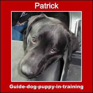 widget_Patrick