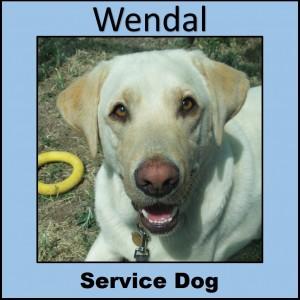widget_wendal